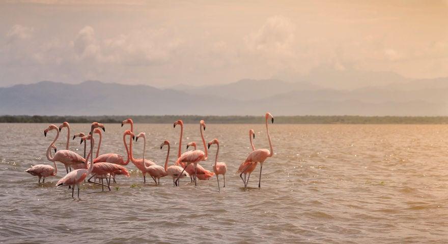 1565078187 a3255d8ebdec7087864db3e58f93fc83 - 20 завораживающих фотографий с конкурса на лучший снимок красот нашей матушки-природы