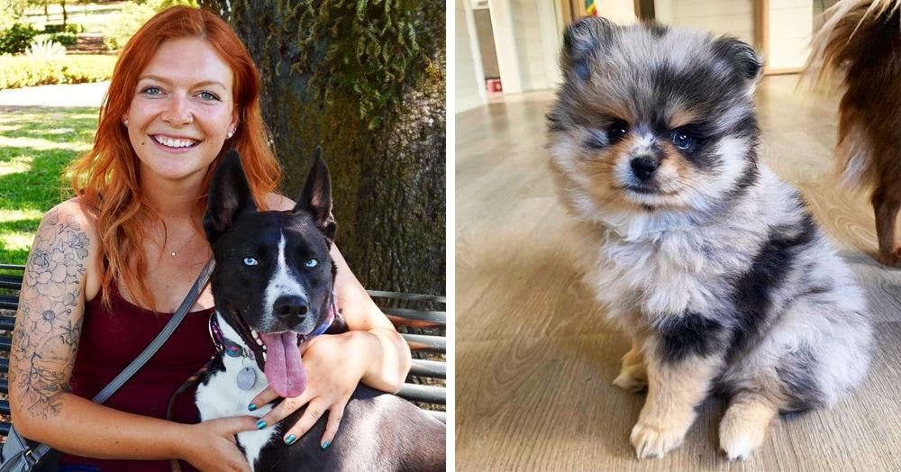 17 собак-метисов, чья шикарность — заслуга родителей разных пород
