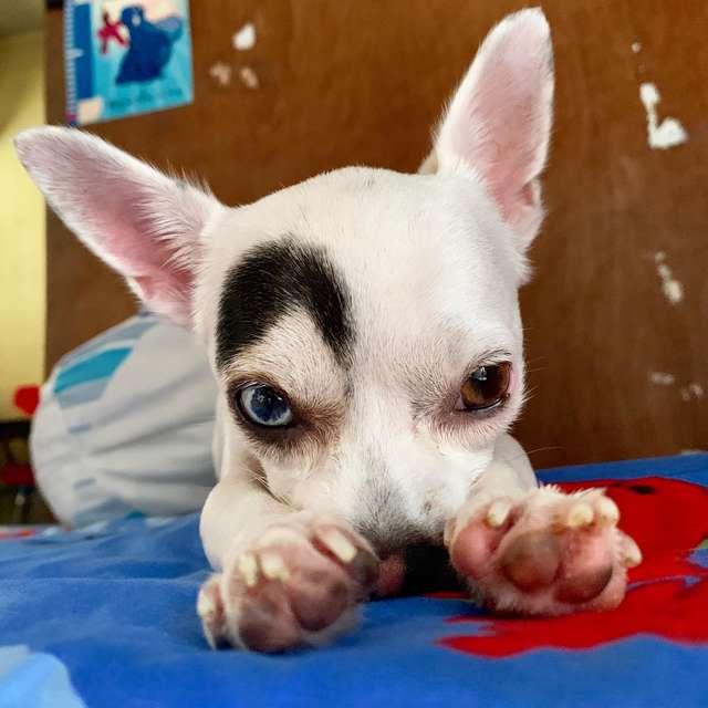 1565269246 9763dbb50706e1e466de1fbd384730ef - В Таиланде обнаружили пса, который выглядит как 2 собаки в 1. Люди думали, фотошоп, но нет — природа