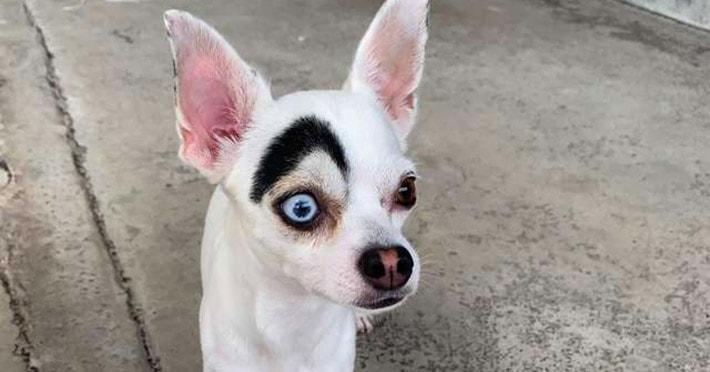 В Таиланде обнаружили пса, который выглядит как 2 собаки в 1. Люди думали, фотошоп, но нет — природа