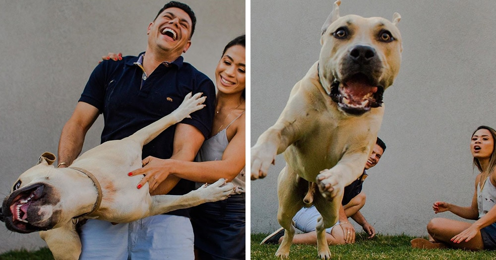 «Он спокойный и будет вести себя хорошо»: Пара взяла пса на предсвадебную фотосессию и не прогадала