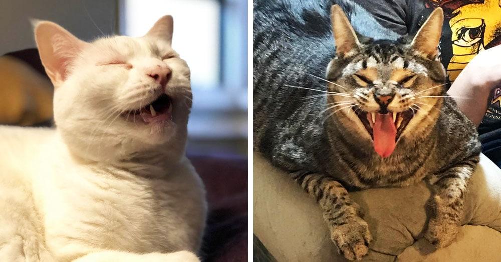 15 безумных фотографий котов, которых подловили на середине чиха