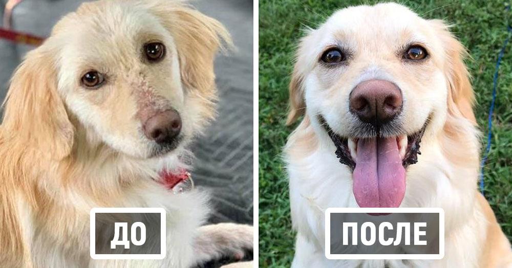 20 примеров того, как расцветают бездомные животные, когда попадают к любящему хозяину