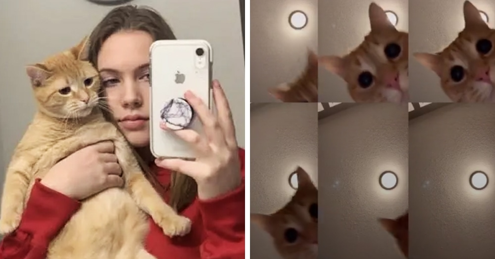 Девушка сняла видео с котом, которое стало популярным. Оно странное, но хочется смотреть на повторе