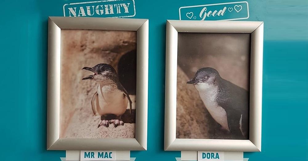 В этом океанариуме пингвины ежемесячно попадают на доску почёта, совершая глупые и милые поступки
