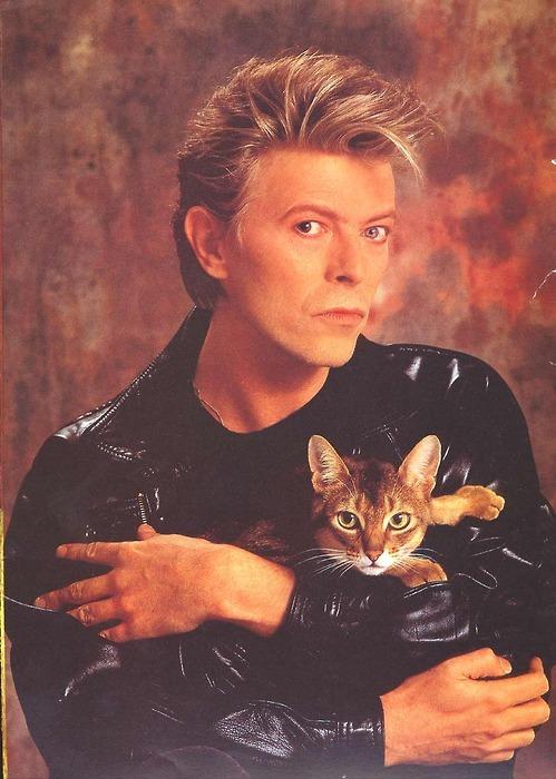 1566294721 54e815d4b011bf09768e994186a922fd - 25 редких фотографий, на которых знаменитости запечатлены со своими любимыми котиками
