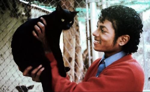 1566300243 286786f8055deb03d3b1a00ea6ffa27e - 25 редких фотографий, на которых знаменитости запечатлены со своими любимыми котиками