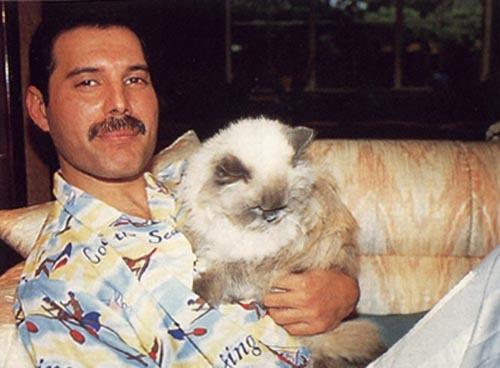 1566300801 1a95a433e748a2f7ab437eb157d473cc - 25 редких фотографий, на которых знаменитости запечатлены со своими любимыми котиками