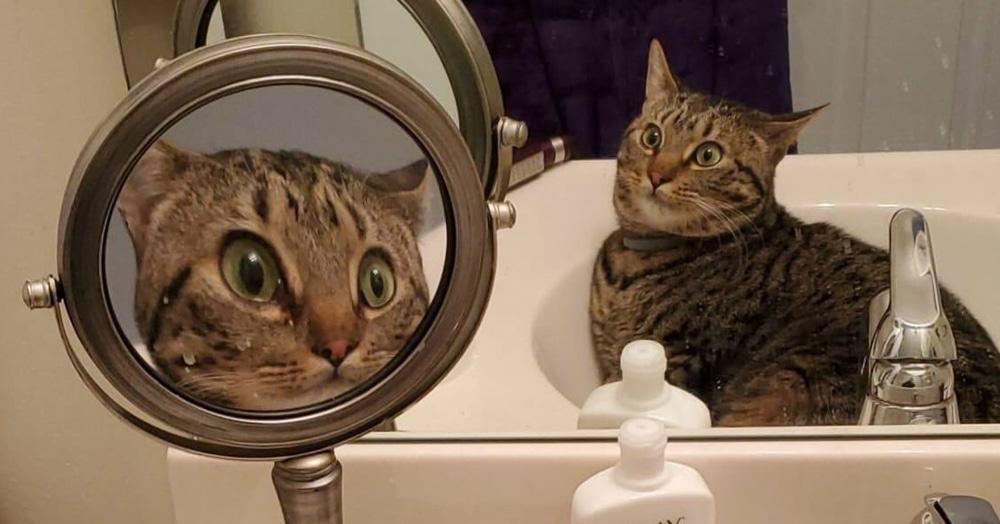 Кот увидел своё отражение в увеличивающем зеркале и выдал реакцию, достойную мемов