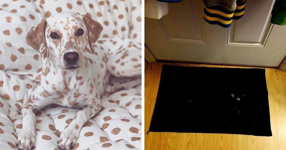 18 снимков замаскировавшихся домашних животных, которых сложно найти и легко потерять