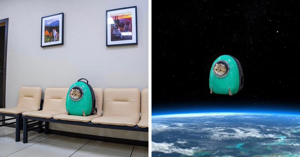 Кот из Москвы стал героем фантастических фотошоп-приключений. А всё благодаря его рюкзаку-переноске