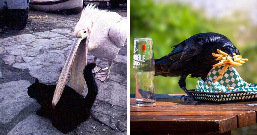 20 наглых птиц, которые ведут себя отвратительно и совсем не раскаиваются