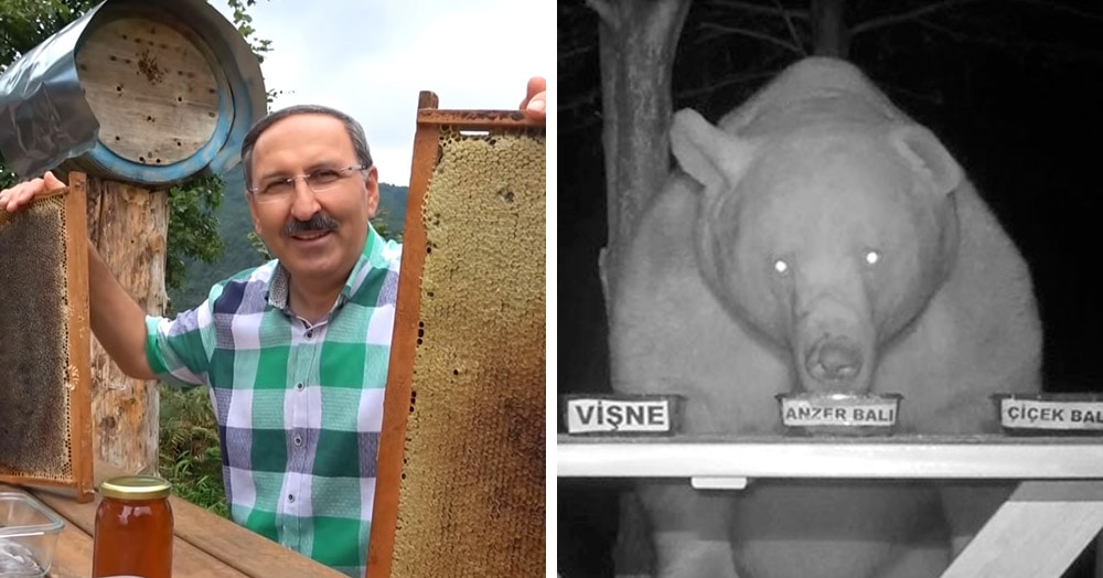 Медведи воровали мёд жителя Турции, но он схитрил и сделал их дегустаторами. Причём идеальными