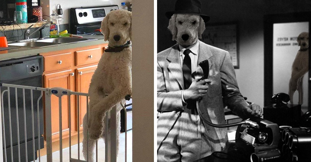 Пёс грозно прислонился к стене и стал героем фотошоп-баттла. А мог бы стать вышибалой в ночном клубе