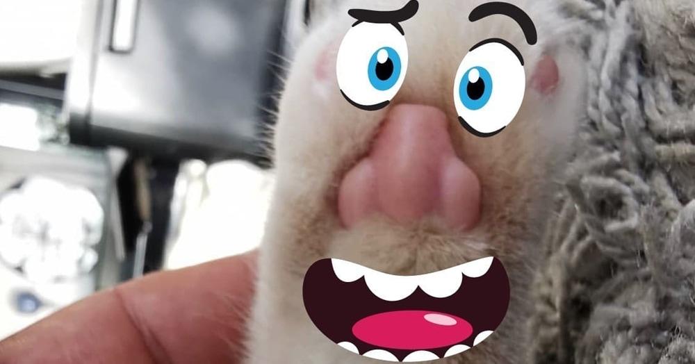 Пикабушник обнаружил, что у котов на лапках человеческие носы. И да, там действительно носы!
