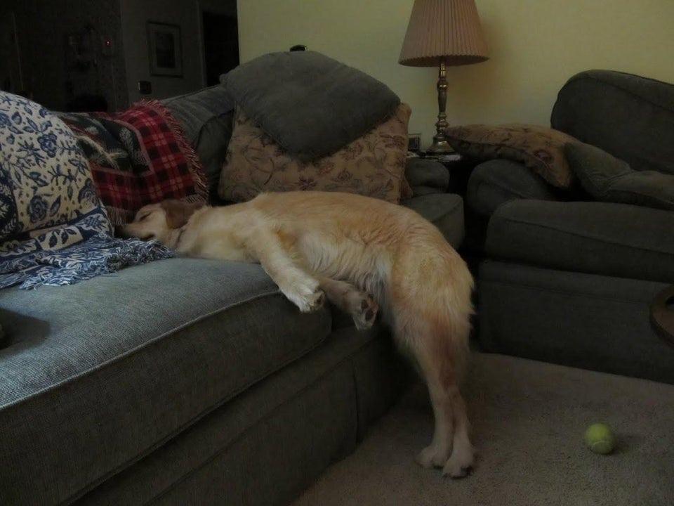 20 собак, которые доказали, что неудобных поз для сна не бывает