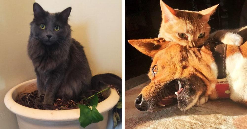 17 животных-нахалов, которые не знают, что такое стыд