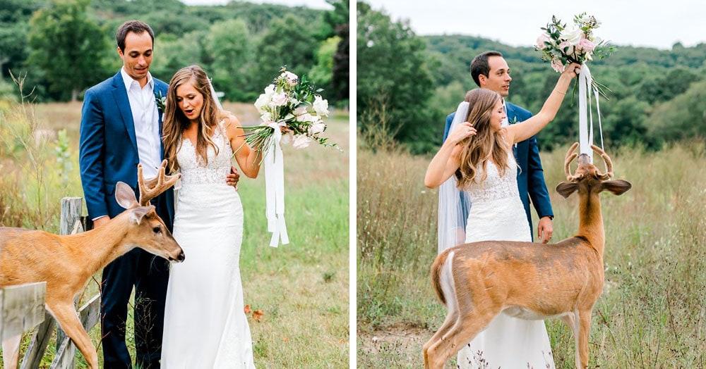 Олень захотел съесть букет невесты и влез в фотосессию. Атака была такой, что паре пришлось сдаться