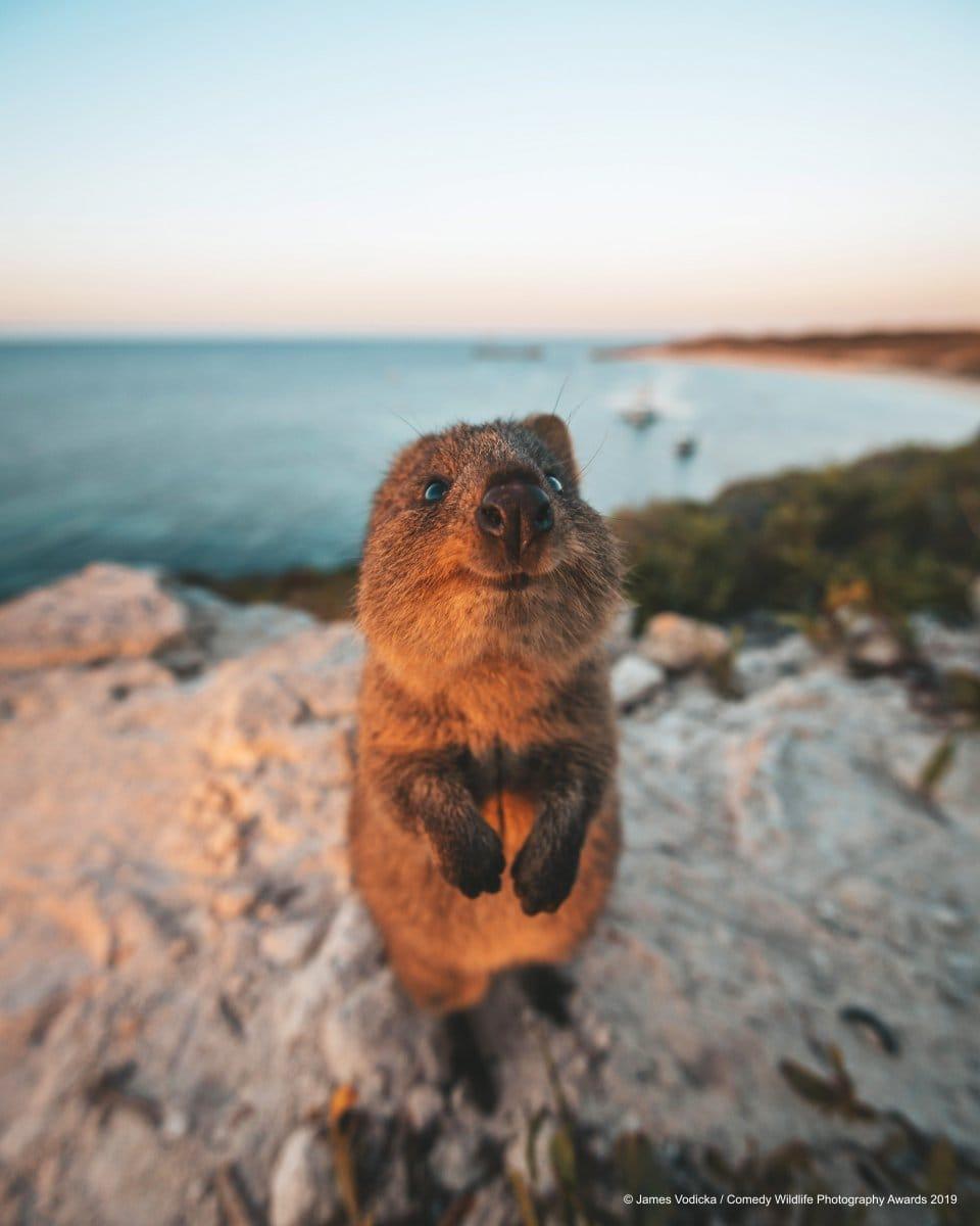 1568273308 48672271c7d30dcfcab0763b3ae55050 - Конкурс комедийной фотографии животных объявил своих финалистов и показал лучшие снимки 2019 года