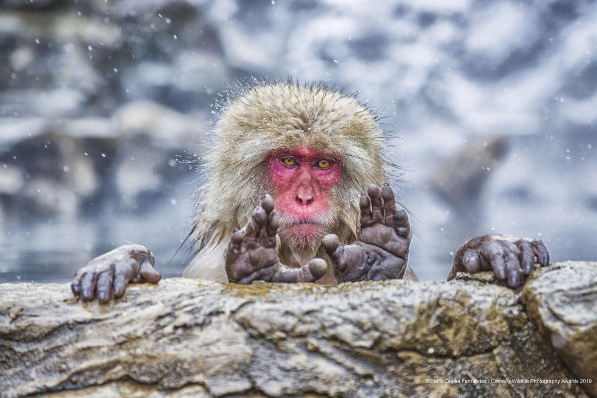 1568273310 d837106adefe3cf53db352bbc8d9b609 - Конкурс комедийной фотографии животных объявил своих финалистов и показал лучшие снимки 2019 года