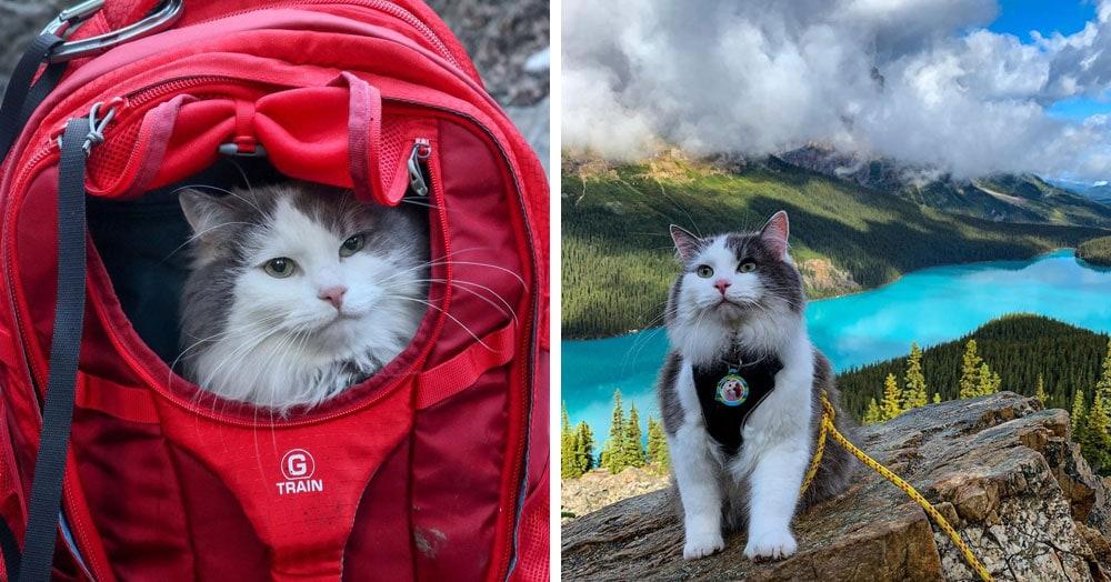 Пушистый кот из Канады гуляет по горам и ведёт Инстаграм, которому позавидует любой тревел-блогер