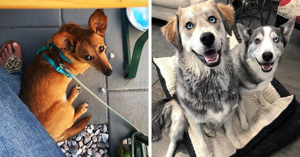 20 очаровательных собак-метисов, которые вобрали в себя лучше черты нескольких пород