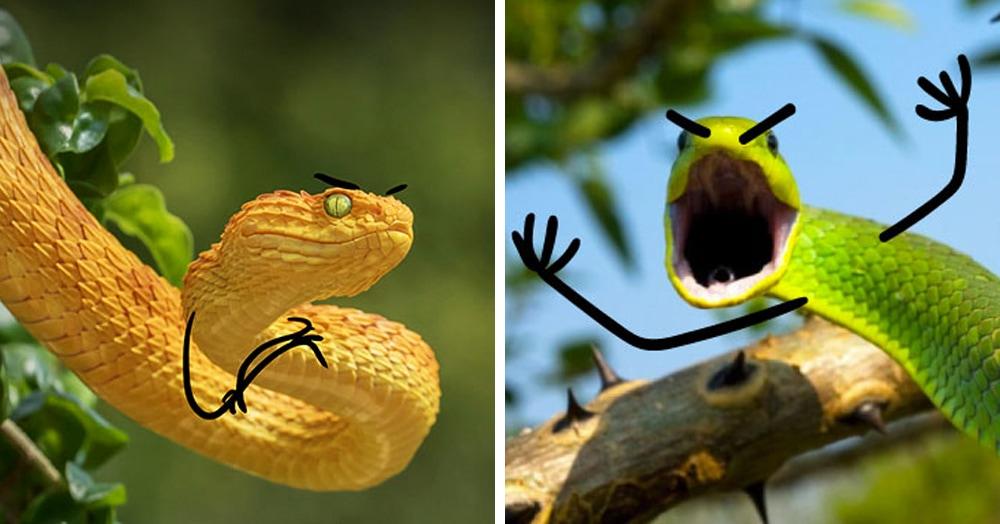 Пользователи сети дорисовали змеям руки и брови. Теперь их эмоциям позавидуют даже комики и актёры!