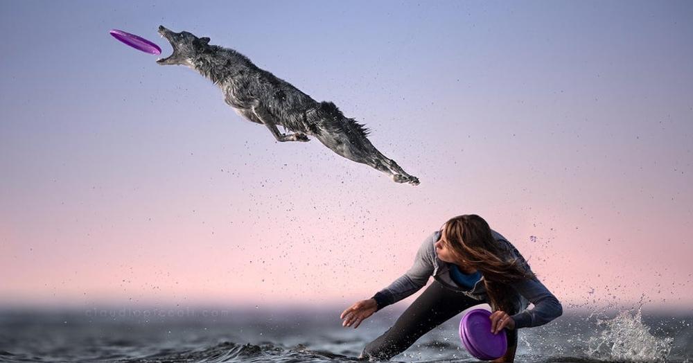 Пёс отчаянно прыгнул за диском для фрисби и моментально влетел в битву фотошоп-мастеров