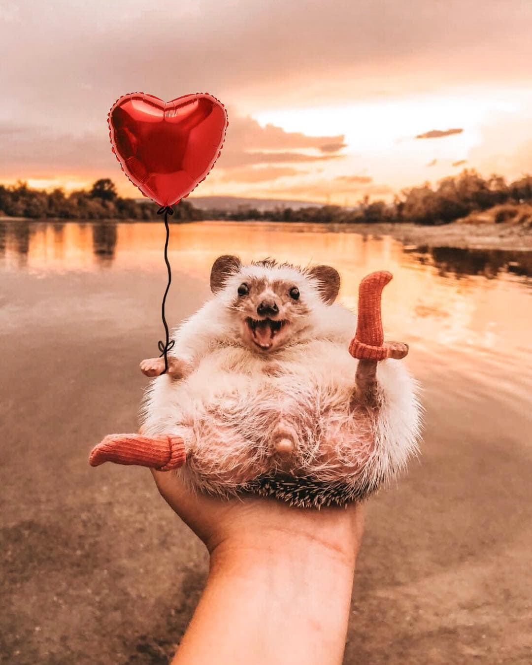 1570456269 8ca55b30478900fb20182b1f630b1390 - 20 снимков очаровательного ежа, который путешествует по миру и завоёвывает людские сердечки