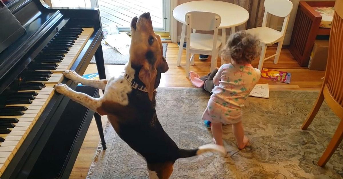 Отец случайно заснял, как его дочь танцует под игру их собаки на пианино. Не зря пса зовут Меркьюри
