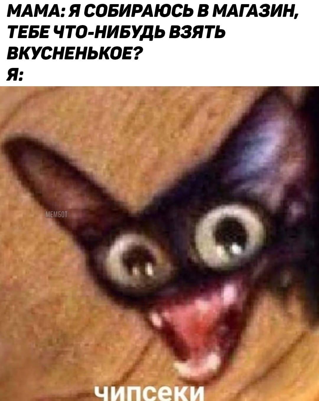 Самые популярные мемы дня