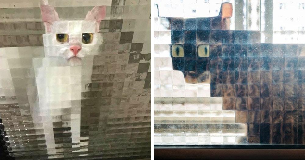 15 случаев, когда рифлёные стёкла в доме превращали котов в произведения сюрреалистов