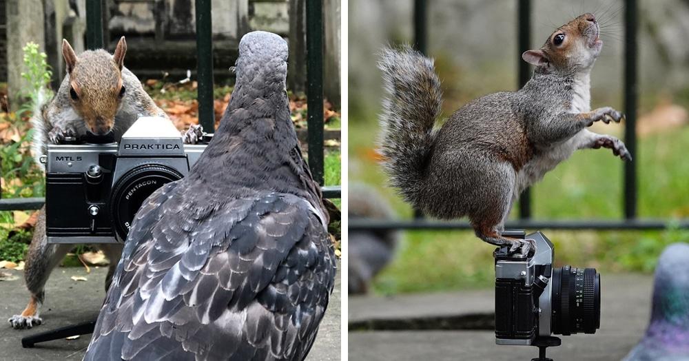 Британец решил поснимать белок в парке, но не тут-то было — звери взяли фотоаппарат в свои лапки