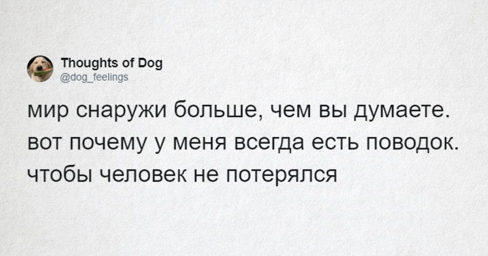 О чём думает ваша собака? В Твиттере есть аккаунт, который мило и с юмором об этом расскажет