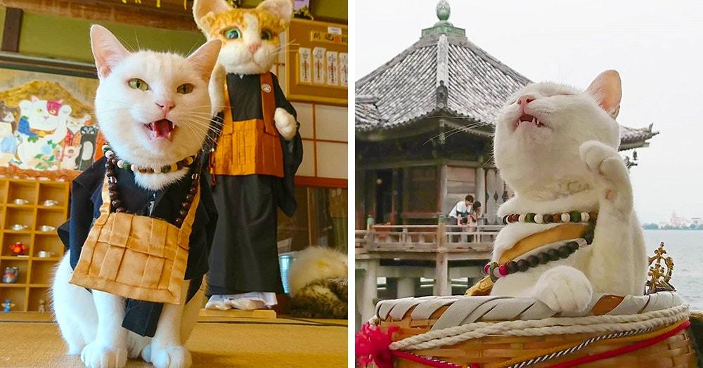 В Японии есть настоящий кошачий храм, чьи монахи обратят вас в свою веру безо всяких служб