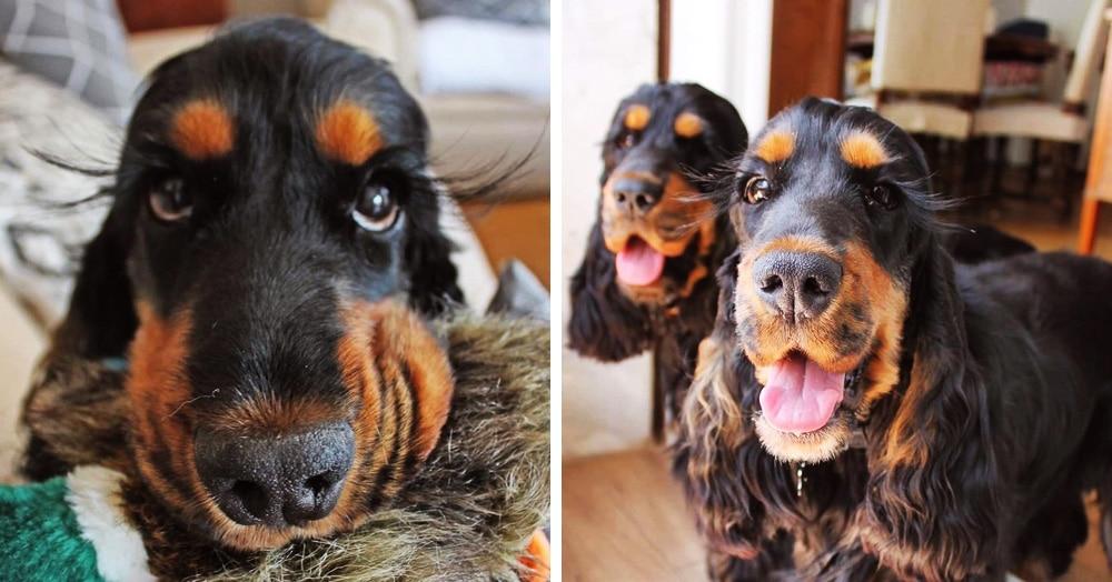 Собаки-близняшки покоряют всех своими ресничками. Ведь выглядят они совсем как из рекламы туши!