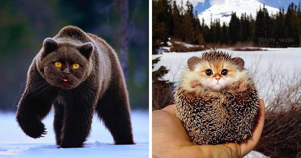 22 гибрида котов с другими животными, в чьё существование почти можно поверить