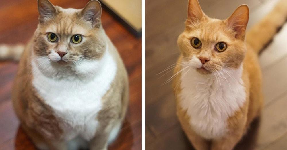 15 снимков животных до и после того, как они превратились из котлеток в атлетов