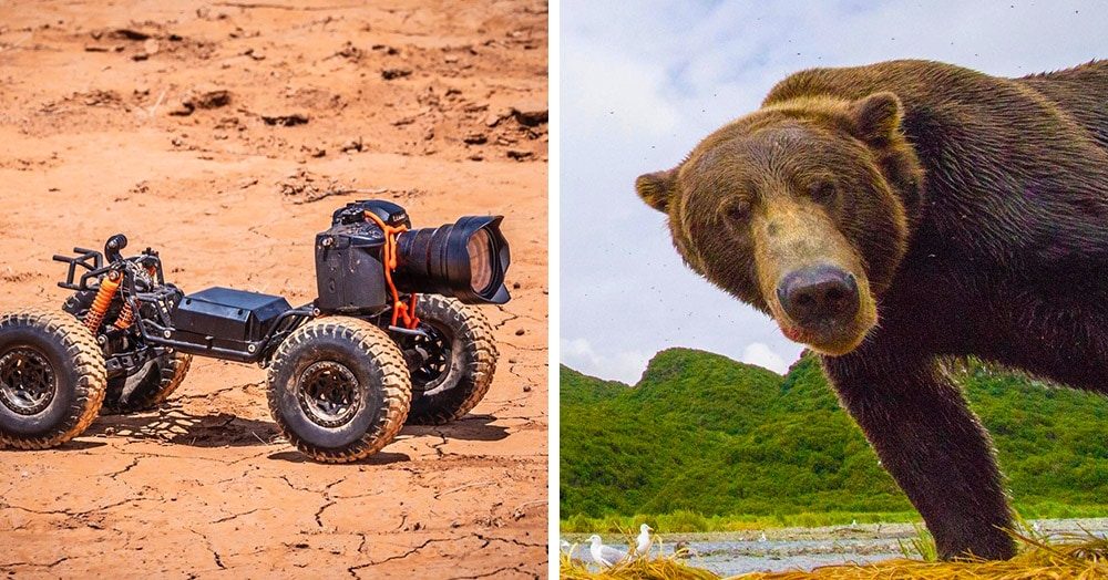 Фотограф прикрепил камеру к машинке с ДУ и снимает смешную реакцию диких зверей