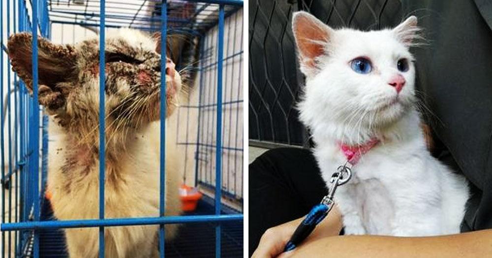 15 котов и собак до и после того, как они попали в заботливые руки новых хозяев