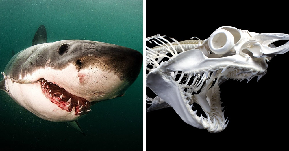 Французские учёные показывают, как выглядят скелеты разных живых существ. Ух, жуть!