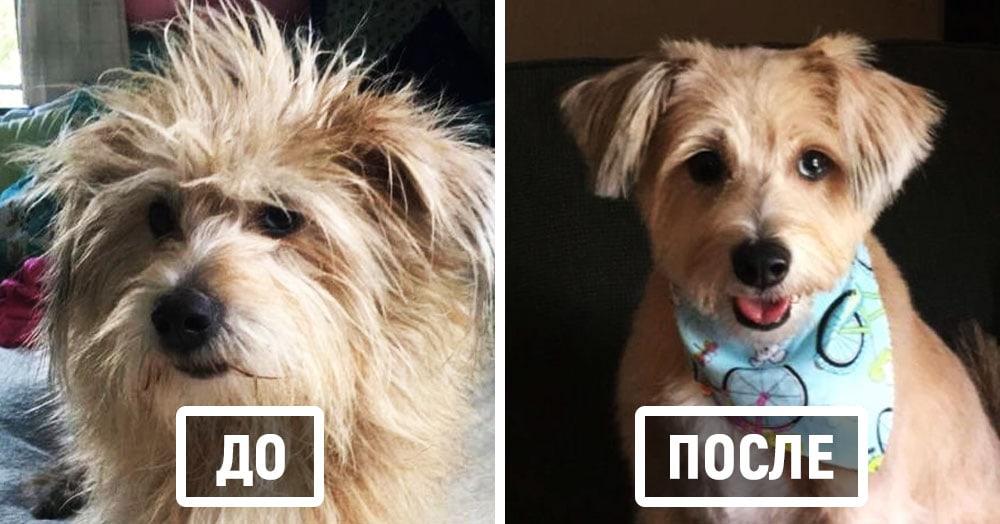 15 примеров того, как собаки преображаются после похода к грумеру