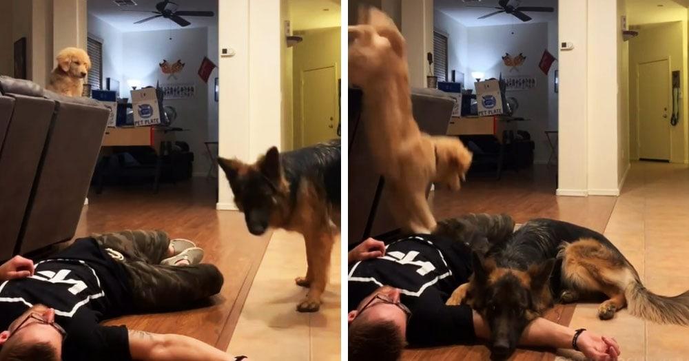 Хозяин решил проверить, как собаки отреагируют на его обморок. Каждая придумала свой план спасения