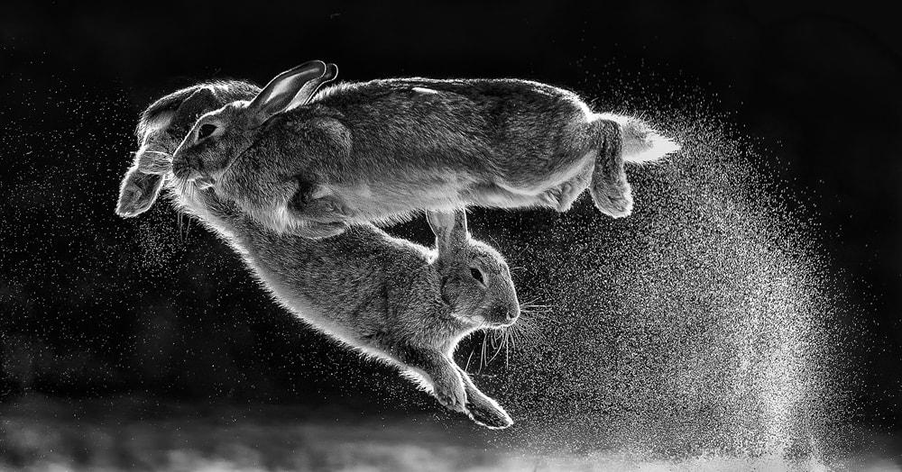 Конкурс на лучшее фото природы назвал победителя и показал работы призёров 2019 года