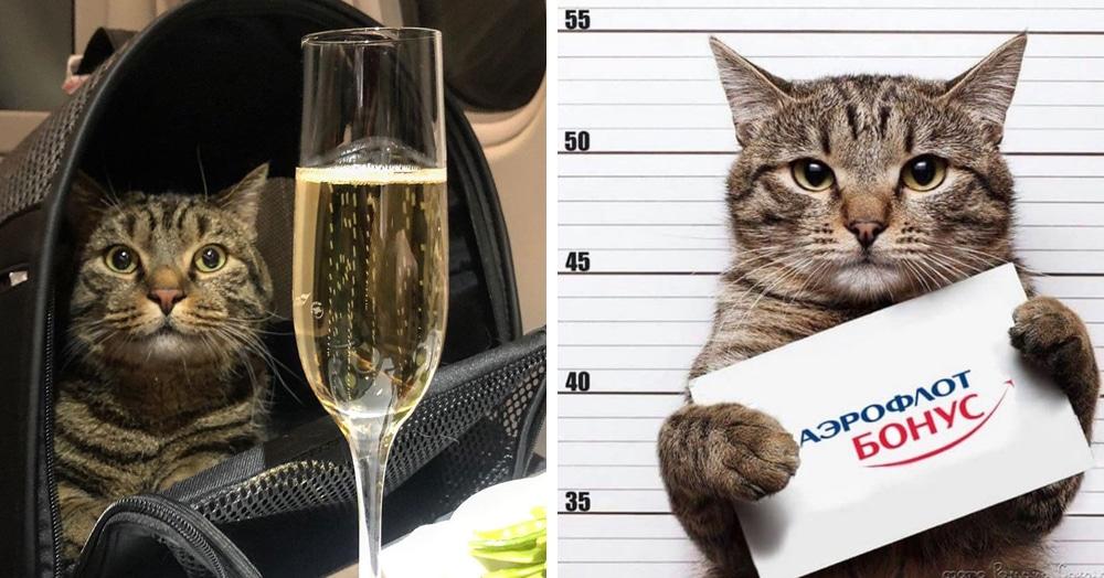 Бро не багаж: как кот, которого не пускали в самолёт, попал в мемы и чем закончилась эта история