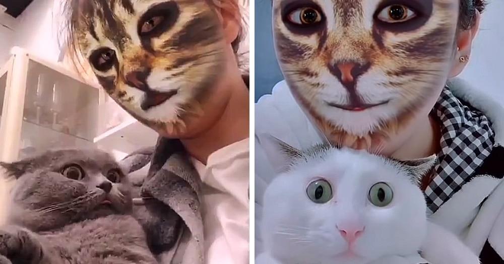 Шок, гнев и отрицание, или что будет, если показать котам людей с кошачьими фильтрами