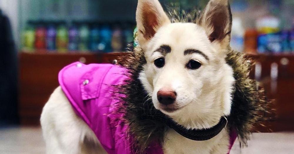 «Брови свои»: волонтёры спасли собаку с необычным окрасом, и её бровкам позавидуют даже мастера