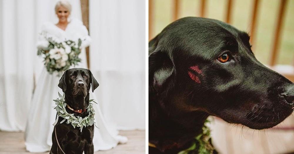 Невеста взяла любимого пса на свадебную фотосессию, и он справился лучше любого жениха