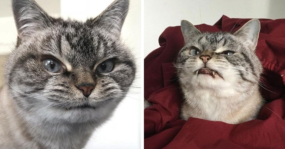 Кошку из-за больших клыков прозвали мурлыкающим вампиром, но ей нужна не кровь, а любовь и забота
