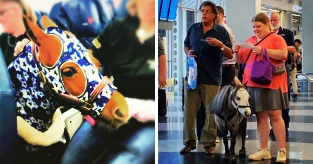 Почему в США можно перевозить пони в салоне самолёта? Где-то тихонько плачет толстый кот Виктор